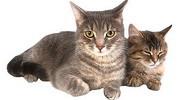 Стерилизация кошек и кастрация котов.