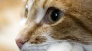 Урологический синдром котов. Причины: