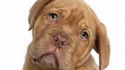 Стерилизация собак. Хорошо это или плохо?